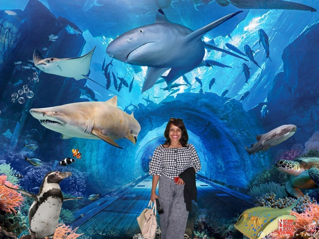 Dubai Aquarium Tunnel
