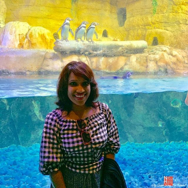 Penguins at Dubai Aquarium and Underwater Zoo
