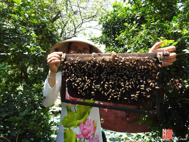 Honey bees hive in Mekong Delta bee farm