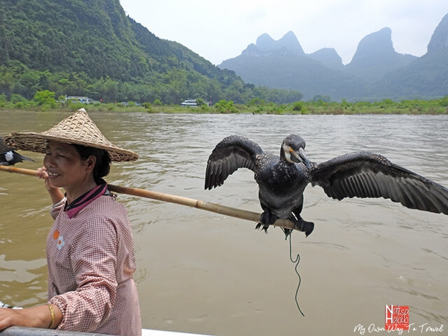 China's traditional cormorant fisher